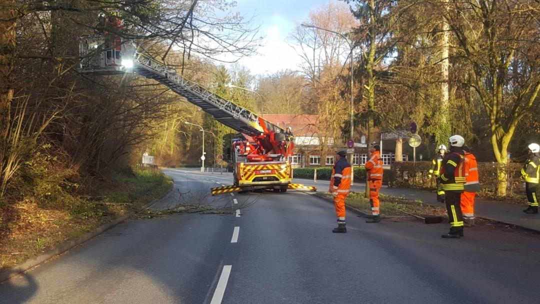Eine Stunde dauerte es, bis der Baum an der Talstraße gefällt war. Foto: Kreisstadt Mettmann