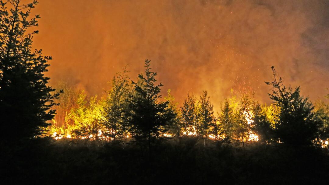 Insgesamt brannten rund zwei Hektar Wald in Ratingen. Foto: Polizei