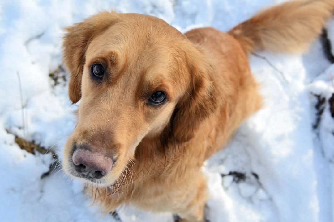 Im Hunde-Café können Halter untereinander und Tierliebhaber Kontakt knüpfen. Foto: Mathias Kehren